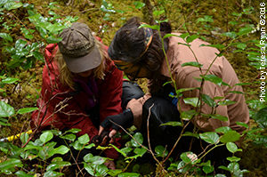 Suzanne with PhD candidate Allen Larocque select research sites in the Heiltsuk First Nation forest