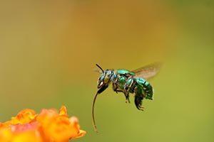 1_Pollinators