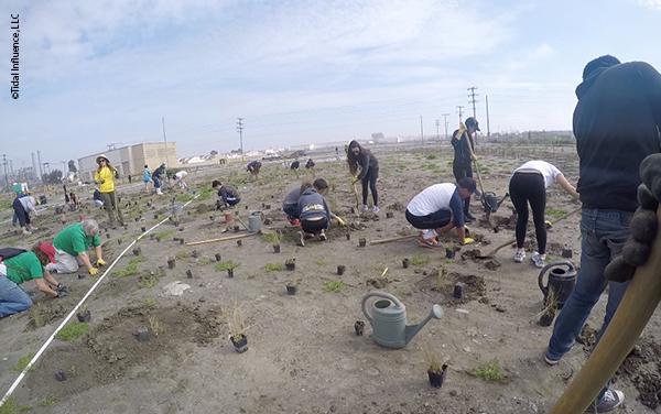 Los Cerritos Wetland restoration planting