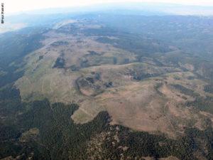 2,384 acre Armillaria ostoyae in Oregon's Blue Mountains