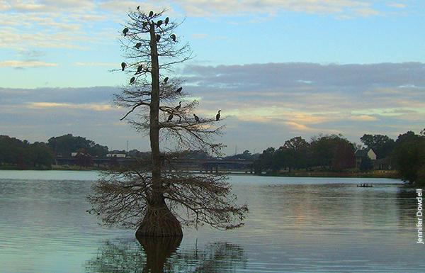 Baton Rouge Lakes Master Plan