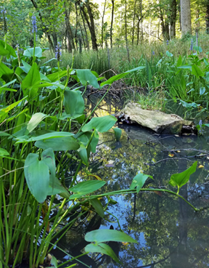 Constructed vernal pool
