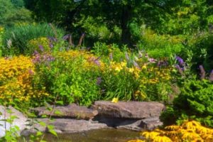 http://www.dreamstime.com/royalty-free-stock-images-butterfly-garden-cutleaf-coneflowers-bush-water-decor-image33564199