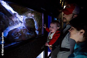 Visitors to the National Aquarium in Baltimore enjoy a rare view of the Texas blind salamander