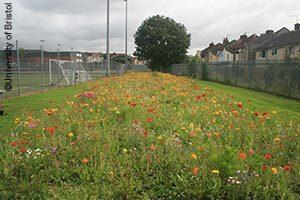 City Academy wildflower meadow