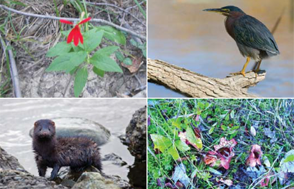 Native species supported by new habitat