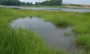 Cox Creek Tidal Wetland Restoration, Baltimore