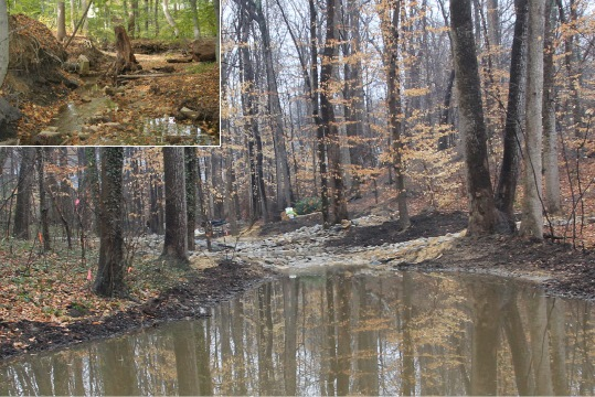 stream restoration essay