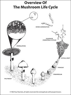 Biohabitats Expert Qa Paul Stamets