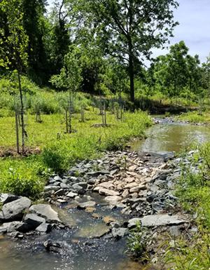 Riffles restore in-stream & riparian habitat connection
