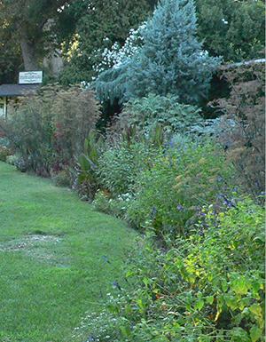 Descanso Gardens_72_2