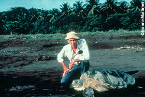 Dr. Archie Carr with green turtle in Tortuguero (credit Jeanne Mortimer) copy