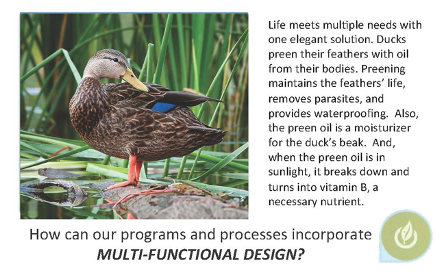 DuckQuack