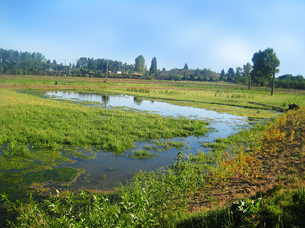 Former sewage lagoons, transformed into treatment wetlands