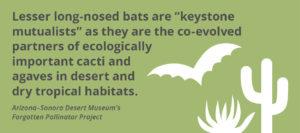 Fact_bats+cacti