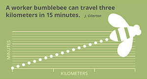 Fact_beetravel