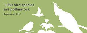 Fact_birdspecies