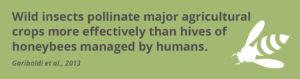 Fact_insectsVShoneybees