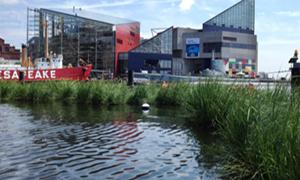 Floating wetlands in Baltimore's Inner Harbor clean water and create habitat