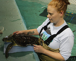 Amber White points to a rescued turtle's damaged shell, likely caused by a boat strike