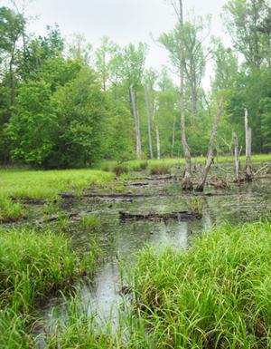 Floodplain wetland preserved by Park