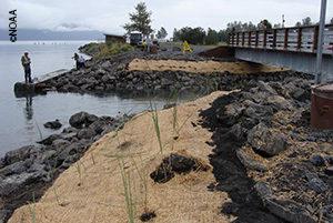 Erosion control, par of restoring salmon habitat on Alaska's Kenai Peninsula