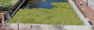 Simulation showing marsh restoration