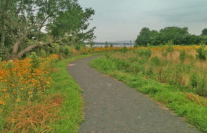 Native vegetation frames a riverfront trail at Lardner's Point Park