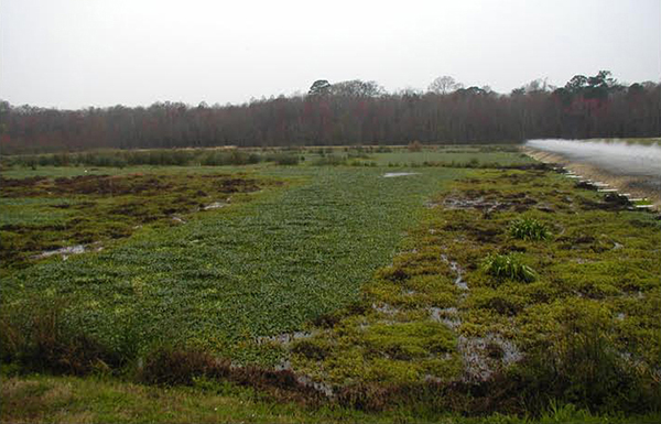 Constructed wetland with trickling filters