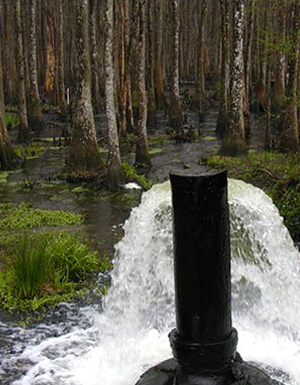 Land application of treated effluent in a cypress forest