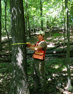 Measuring a tree as part of forest assessment