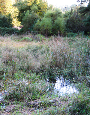 Outdoor education pond