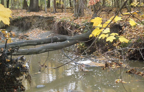 Initial conditions with bank erosion and large woody debris falling into stream