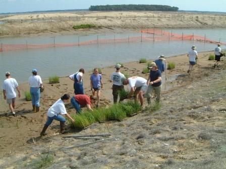 Poplar Island Planting