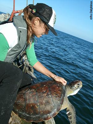 A Pro Delphinus staff member releases a sea turtle