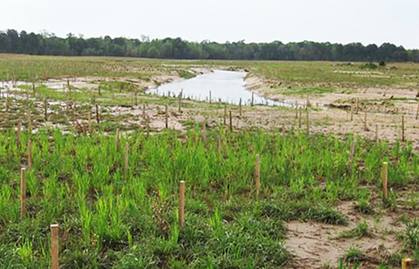 Remeandered channel one month after construction and planting