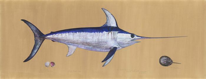 Swordfish ©James Prosek