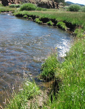 Initial conditions with eroding stream banks