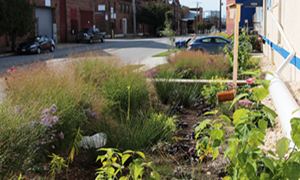 Bioretention planters treat rooftop runoff while adding beauty and habitat in an industrial part of Baltimore, MD.