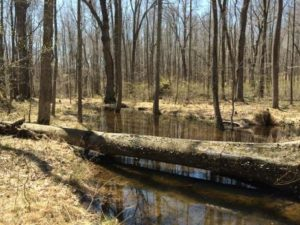 Vernal pools may not look like it from afar, but they're stirring with life