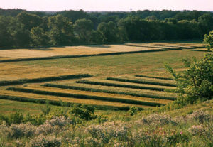 An agroecology plot ©The Land Institute.