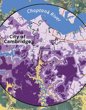 Map showing low to high conservation value (light to dark purple) and predicted inundation from two-foot sea level rise (gold) in the Cambridge area.