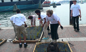Volunteers Planting Floating Wetlands, Baltimore