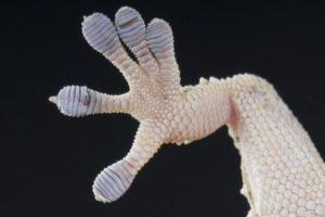 http://www.dreamstime.com/stock-photos-gecko-foot-image25263133