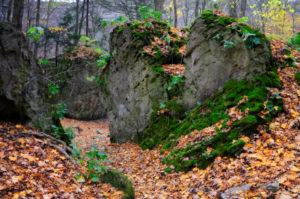 Trail in Escarpment