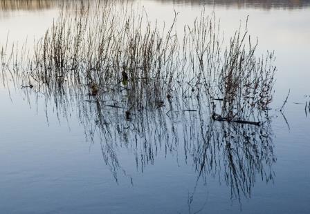 River Grass, by Jaqueline Gauer