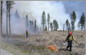 Prescribed burning in KootenayNational Park ©Parks Canada, A. Dibb