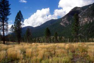 Restored habitat, Kootenay National Park ©Parks Canada, A. Dibb