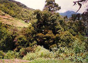 Sacred Natural Site in Trashi Yangtse, eastern Bhutan ©Elizabeth Allison