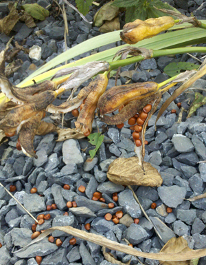 Native wetland seeds attract diverse wildlife